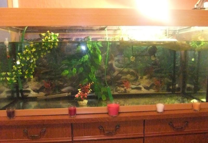 Mes tortues (Marjorie) Aqua_a10