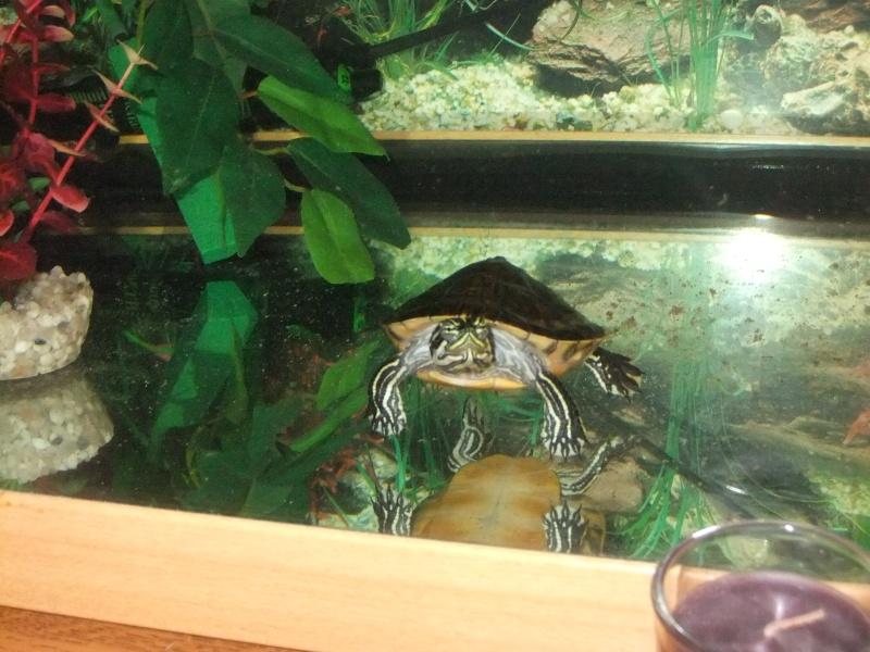 Mes tortues (Marjorie) Dscf3714