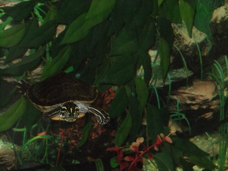 Mes tortues (Marjorie) Dscf3913