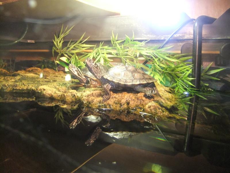 Mes tortues (Marjorie) Dscf4013