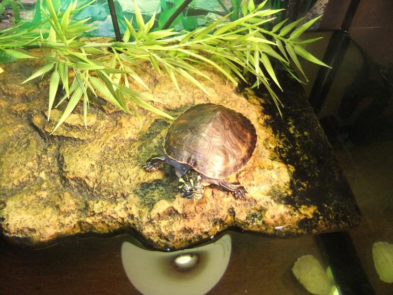 Mes tortues (Marjorie) Dscf4016