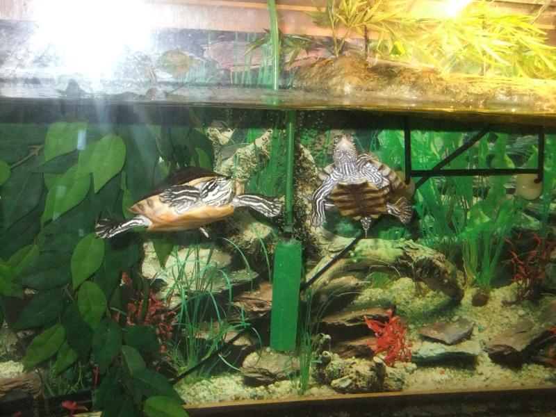 Mes tortues (Marjorie) - Page 2 Dscf4410