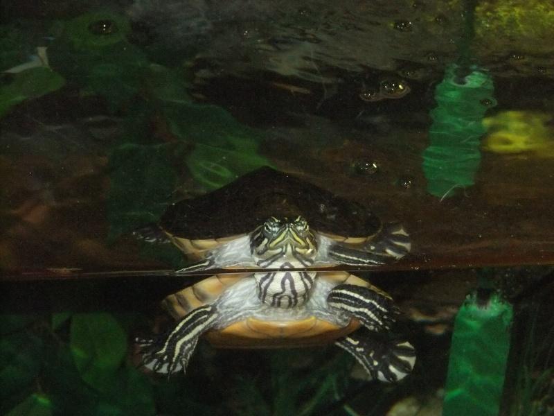 Mes tortues (Marjorie) - Page 2 Dscf4411