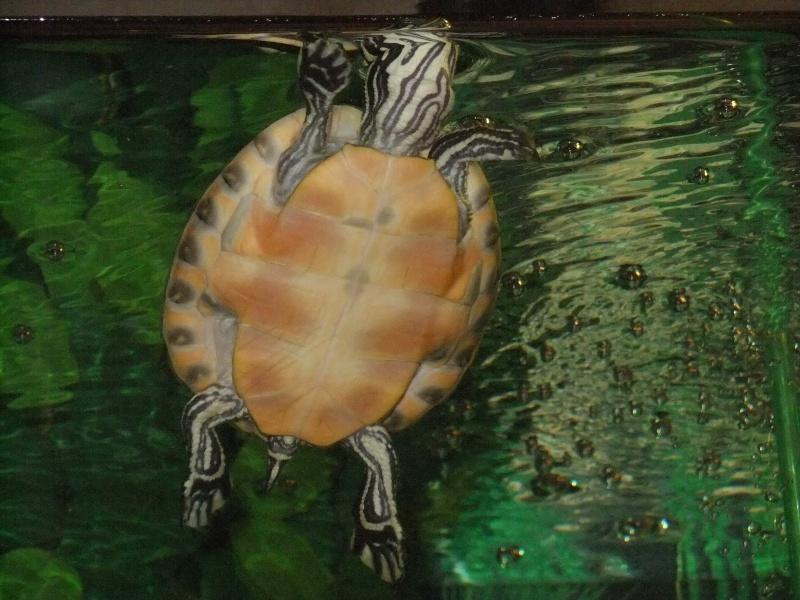 Mes tortues (Marjorie) - Page 2 Dscf4510