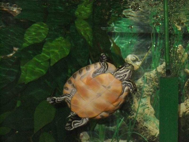 Mes tortues (Marjorie) - Page 2 Dscf4513