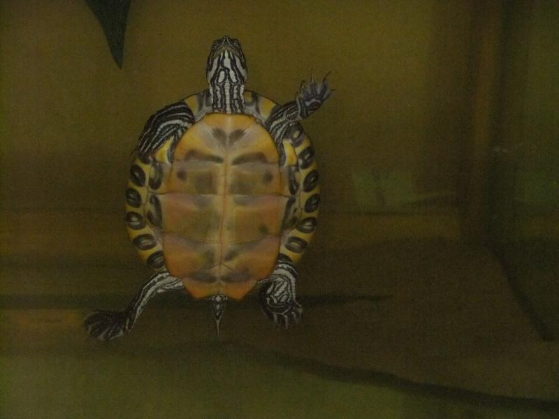 Mes tortues (Marjorie) - Page 2 Dscf4515