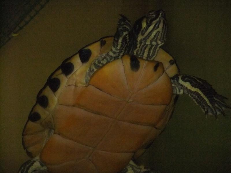 Mes tortues (Marjorie) - Page 2 Dscf4520