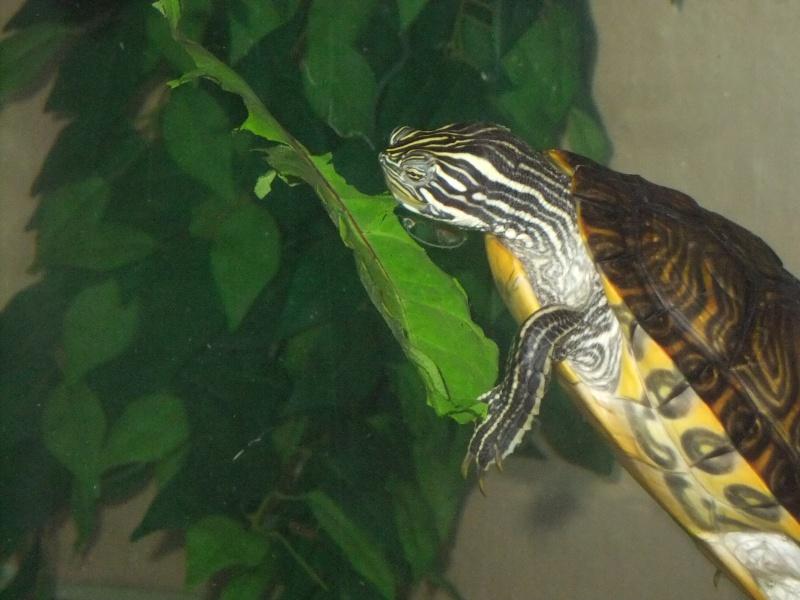 Mes tortues (Marjorie) - Page 2 Dscf5521