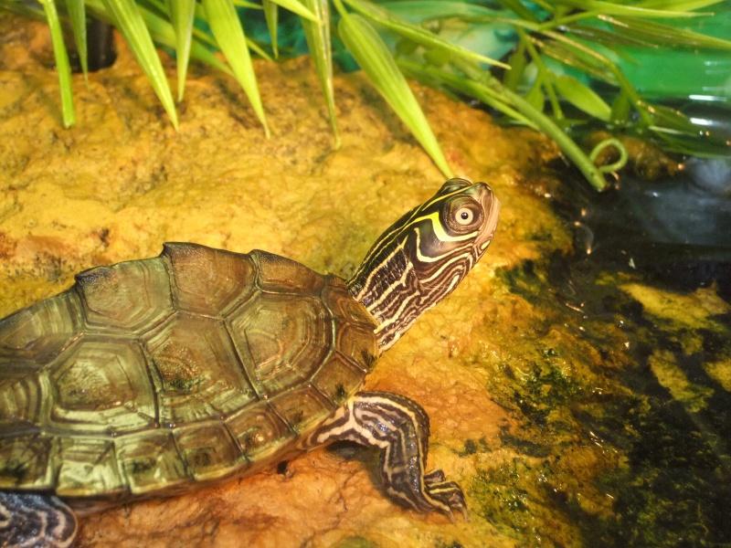 Mes tortues (Marjorie) - Page 2 Dscf6411