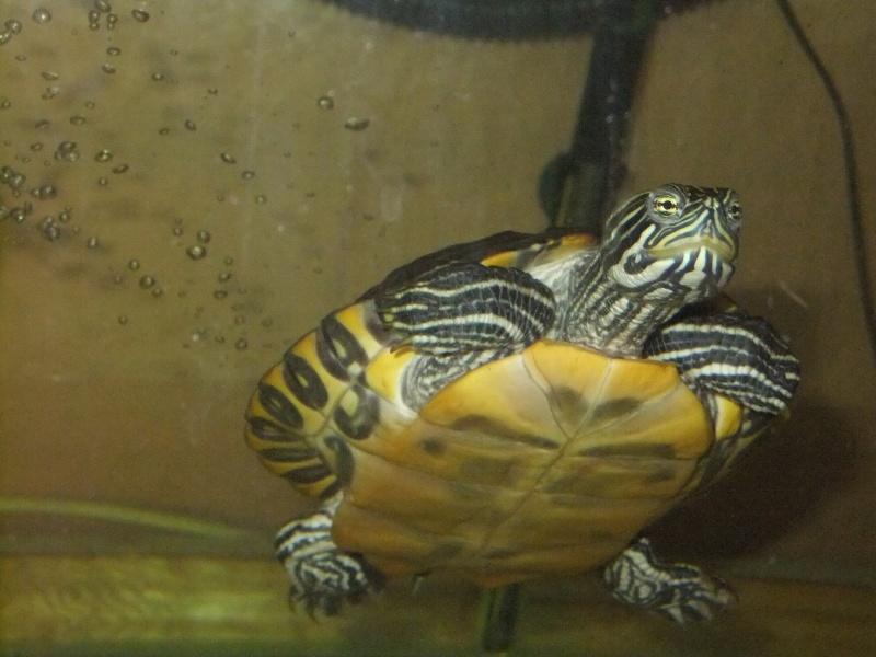 Mes tortues (Marjorie) - Page 2 Dscf6412