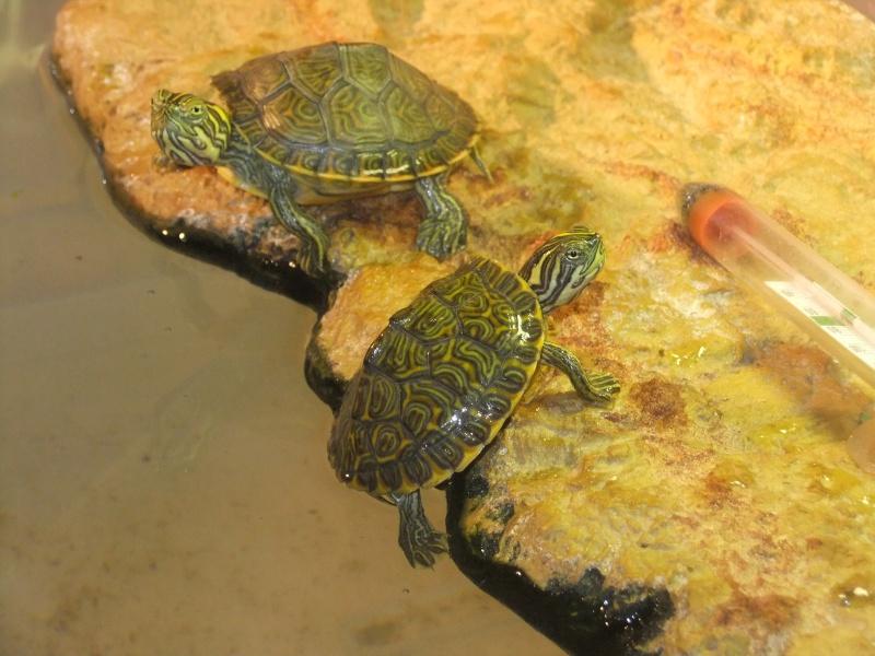 Mes tortues (Marjorie) - Page 2 Dscf6418
