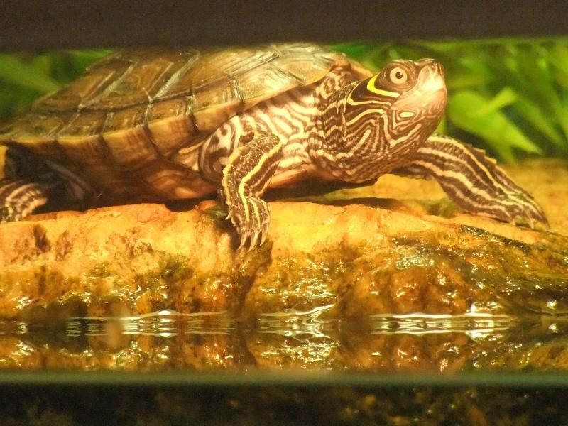 Mes tortues (Marjorie) - Page 2 Dscf7116