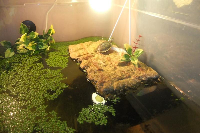 Mes tortues (Marjorie) - Page 2 Dscf7712