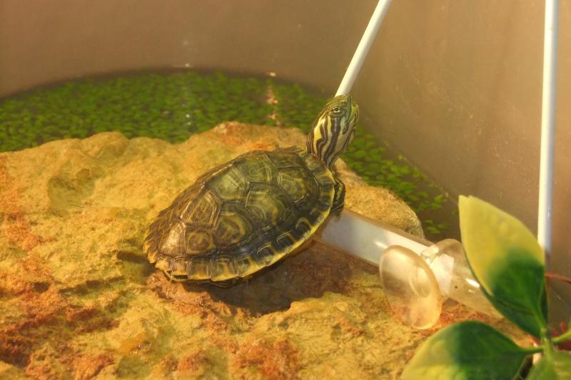 Mes tortues (Marjorie) - Page 2 Dscf7713