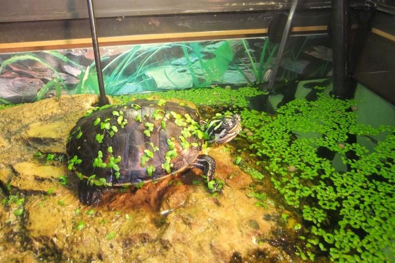 Mes tortues (Marjorie) - Page 2 Dscf7714