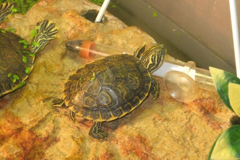 Mes tortues (Marjorie) - Page 2 Dscf7717