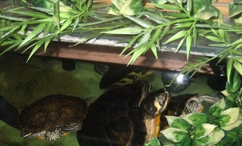 Mes tortues (Marjorie) Les_3_10