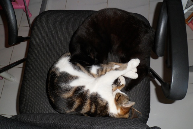 mes miens de chats ;) 00117