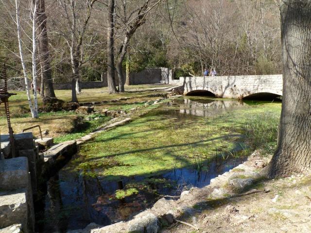 FOIRE AUX PLANTES de BRISSAC (Hérault 34) 02118