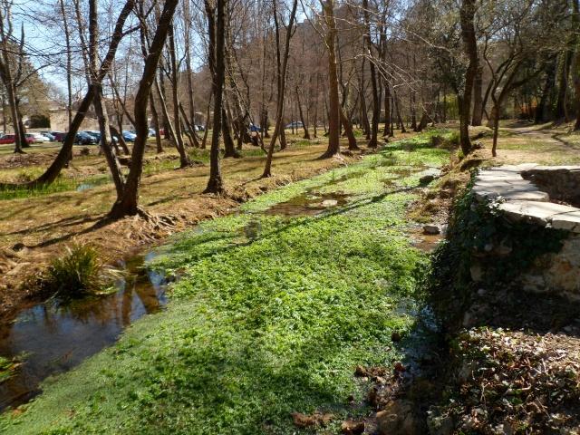 FOIRE AUX PLANTES de BRISSAC (Hérault 34) 02614
