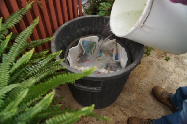 LA PLANTATION DU  RHIZOME DE LOTUS Dsc01414