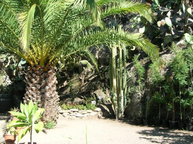 Jardin méditerranéen de ROQUEBRUN Visite28