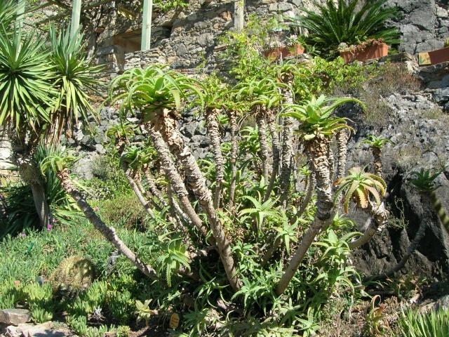 Jardin méditerranéen de ROQUEBRUN Visite29