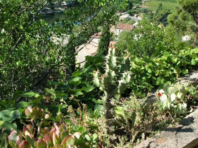 Jardin méditerranéen de ROQUEBRUN Visite30