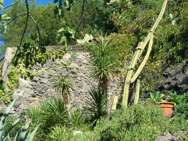 Jardin méditerranéen de ROQUEBRUN Visite31
