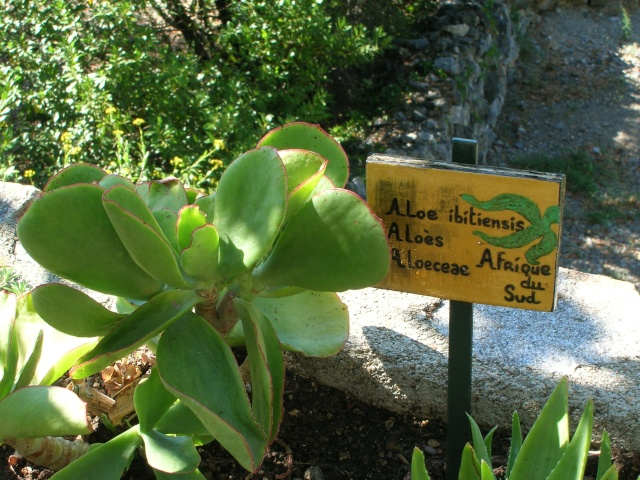 Jardin méditerranéen de ROQUEBRUN Visite32