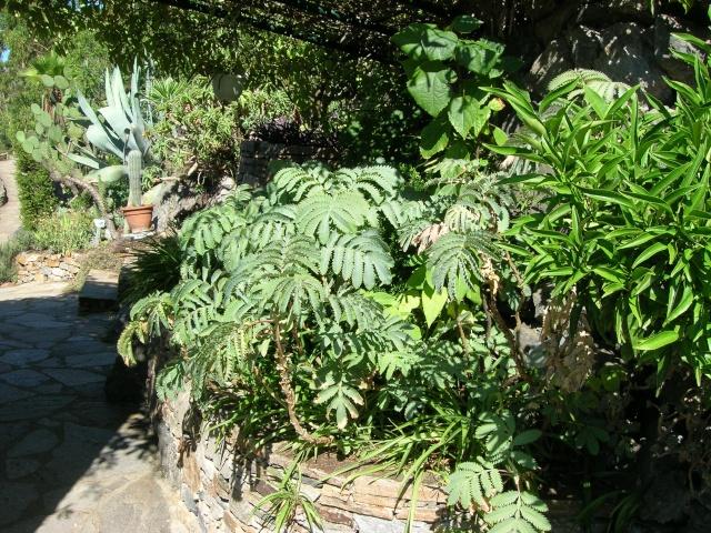 Jardin méditerranéen de ROQUEBRUN Visite37