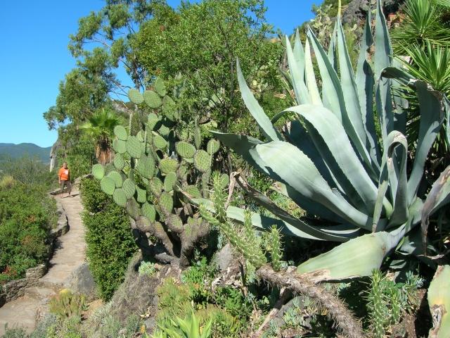 Jardin méditerranéen de ROQUEBRUN Visite38