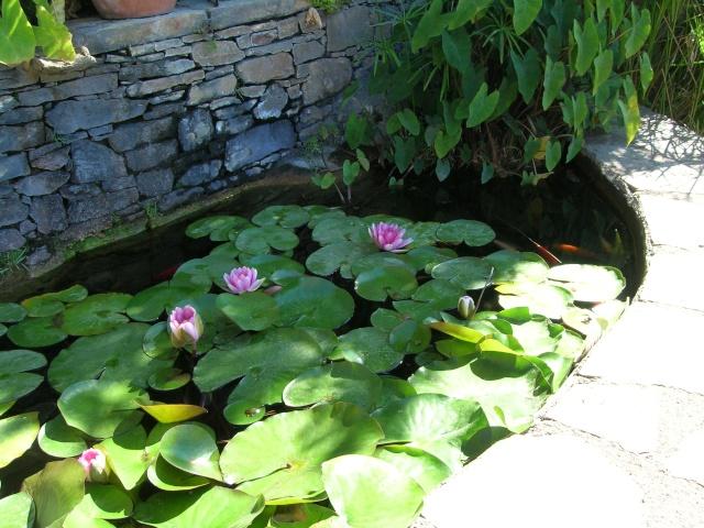 Jardin méditerranéen de ROQUEBRUN Visite43