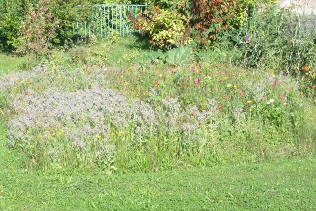 Favorisons les jachères florales ! P1020512