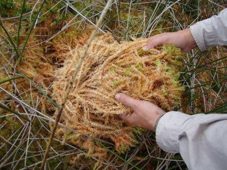 matériaux des substrats et mélanges : propriétés et usages Sphaig10