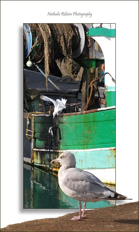 L'album photo de Nathalie56 - Page 2 Sachag10