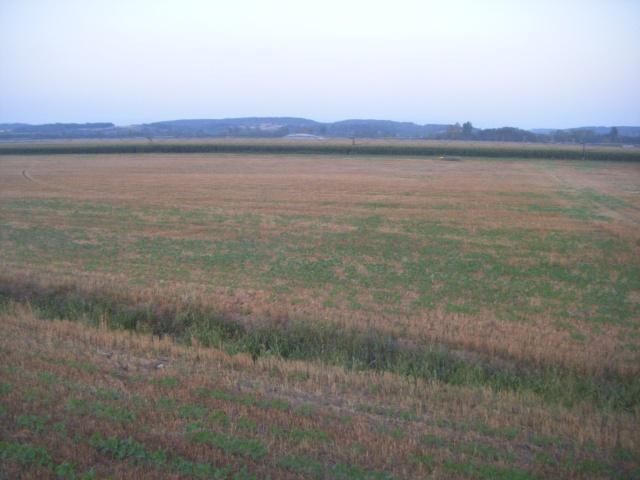 dérobé tournesol et soja sud Toulouse Dscf9010