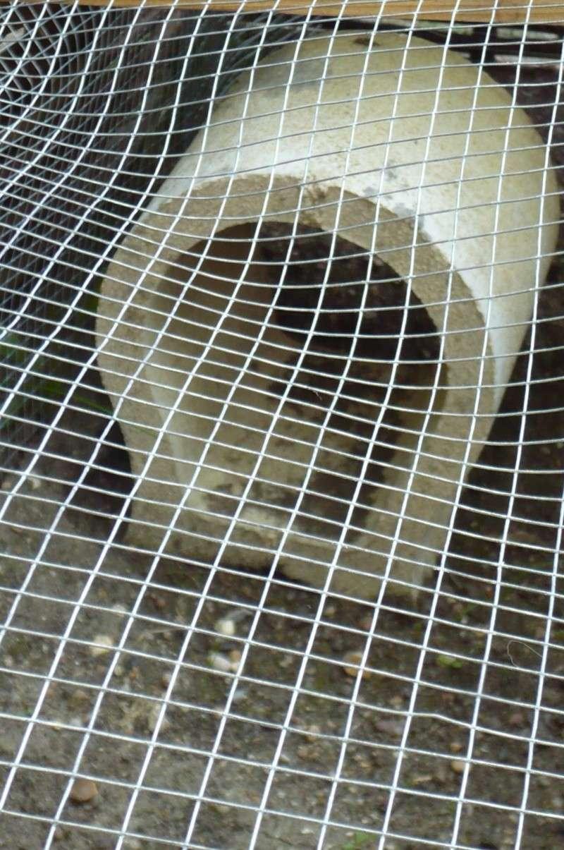 Préparation enclos de Coralie P1170910