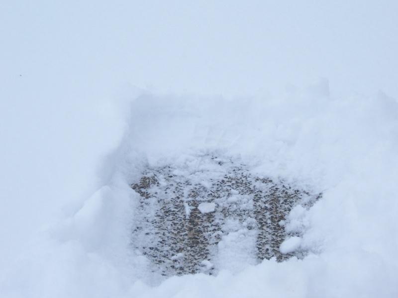 Ca y'est il neige - Page 4 100_5415