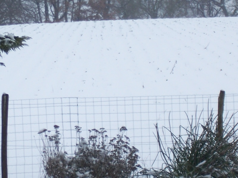 Ca y'est il neige - Page 4 100_5418