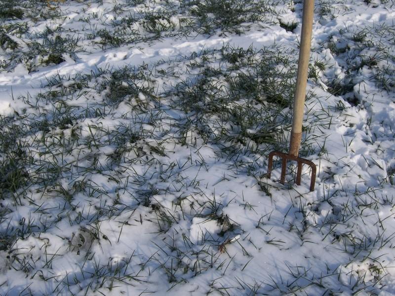 Risque de gel important pour les blés - Page 10 100_5429