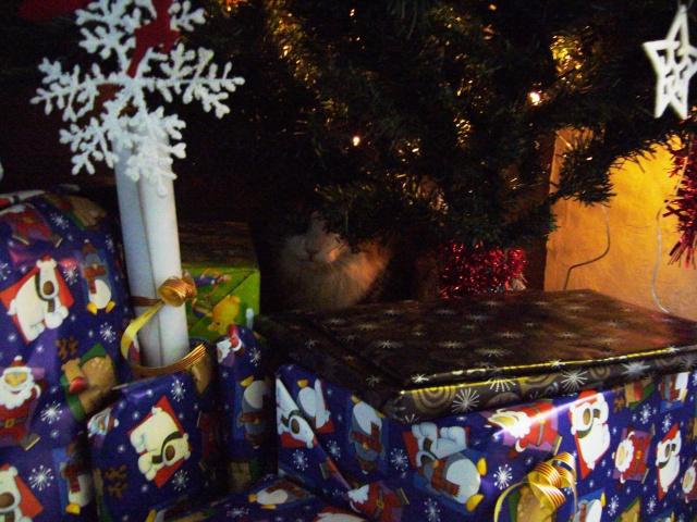 Spécial Photos :  Noël - Page 2 P1080312