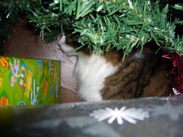 Spécial Photos :  Noël - Page 2 P1080418