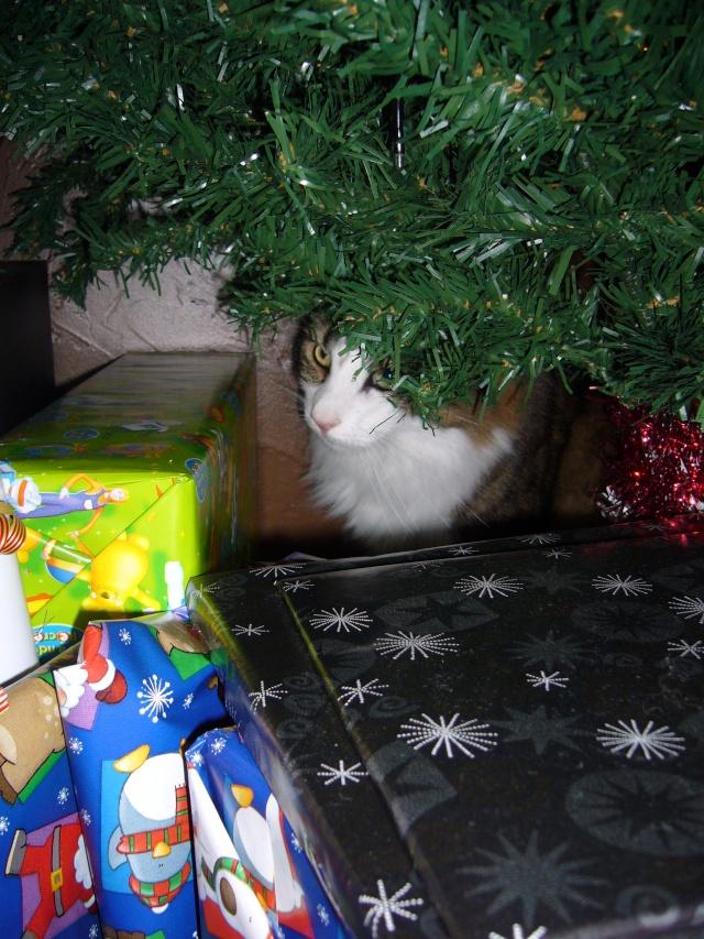 Spécial Photos :  Noël - Page 2 P1080419