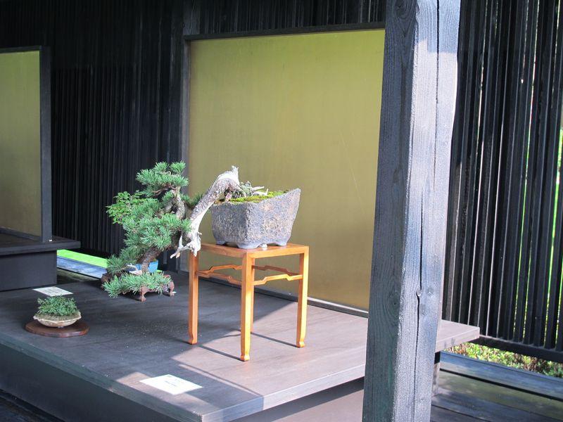 50° anniversario Crespi Bonsai Foto2510