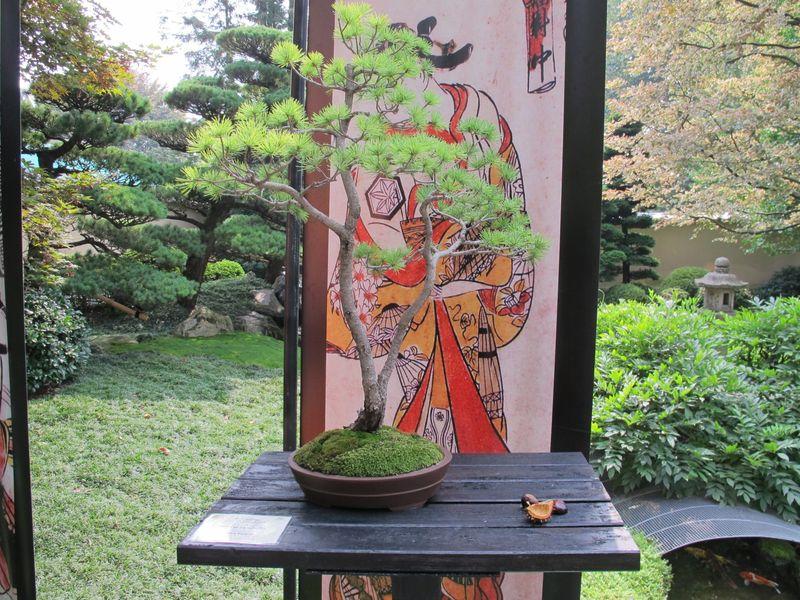 50° anniversario Crespi Bonsai Foto3210