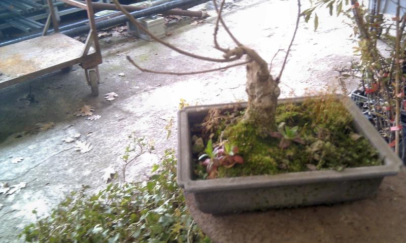 horror bonsai gallery Imag0410
