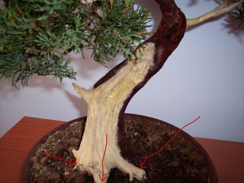 """Come proteggere il """"secco"""" dei nostri bonsai Partic12"""