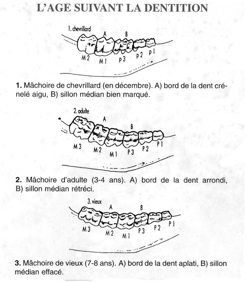 Étude et gestion du chevreuil ... Chevre11