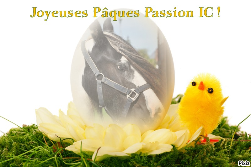 """concours photo """"spécial Pâques"""" - Page 2 Pixiz_10"""
